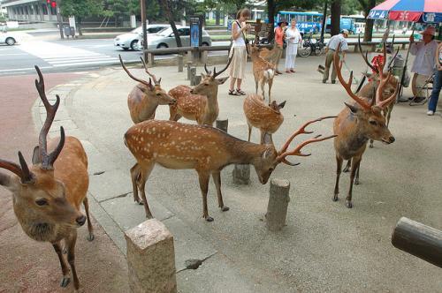 daniele w Nara